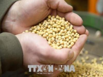 Thông tin về đàm phán thương mại Mỹ-Trung chi phối thị trường nông sản