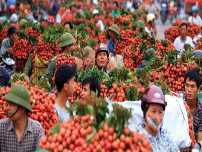 Chính sách thắt chặt nhập khẩu từ Việt Nam của Trung Quốc và lý do có thể ẩn chứa đằng sau