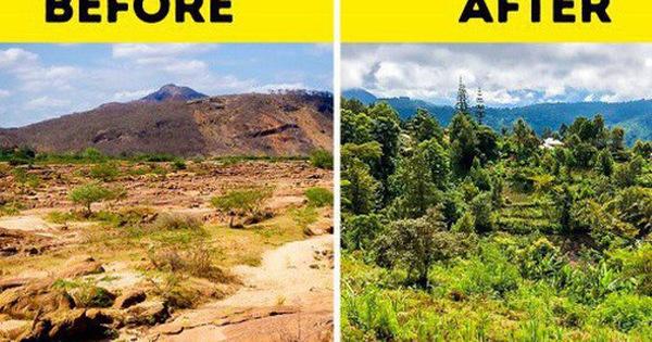 Quên Google đi: Công ty này sẽ trồng thêm cây cho mỗi lần bạn sử dụng công cụ tìm kiếm của họ