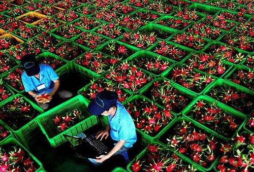 DN Việt cần lưu ý gì khi xuất khẩu hàng hóa sang Trung Quốc?