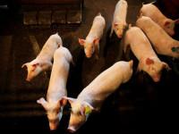 Trung Quốc tuyên bố tạm dừng nhập khẩu tất cả các sản phẩm thịt của Canada