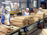 Việt Nam dẫn đầu Đông Nam Á về xuất khẩu gỗ hợp pháp sang Mỹ