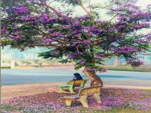 Phượng tím Đà Lạt: Những khám phá thú vị