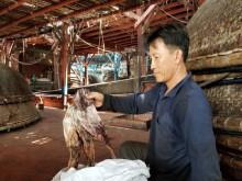 Trung Quốc thay đổi phương thức nhập khẩu, gần 1.000 tấn khô mực ở Quảng Nam tồn đọng