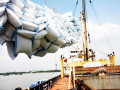 Tầm nhìn dài hạn cho doanh nghiệp xuất khẩu gạo Việt Nam