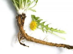 Những lưu ý khi dùng thảo dược làm sạch thận