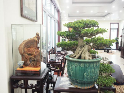 Bộ sưu tập bonsai tiền tỷ và đồ chơi VIP của giới nhà giàu Việt