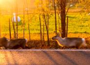 Rừng cây thay lá vàng như mật ngọt ở Phần Lan
