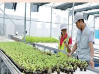 Lo đầu ra cho nông nghiệp công nghệ cao