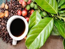Xuất khẩu cà phê giảm mạnh