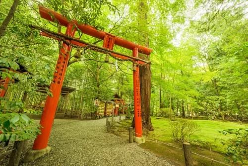 Rừng tre nơi giới quý tộc Nhật Bản yêu thích hơn 1.000 năm trước