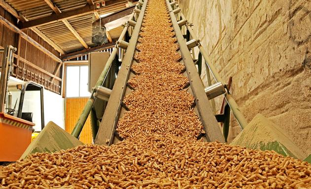 Hệ lụy lớn từ tăng thuế xuất dăm gỗ?