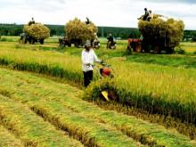 Doanh thu bảo hiểm nông nghiệp cán mốc 400 tỷ đồng
