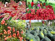 Xuất khẩu nông sản sang Trung Quốc dẫm chân tại chỗ