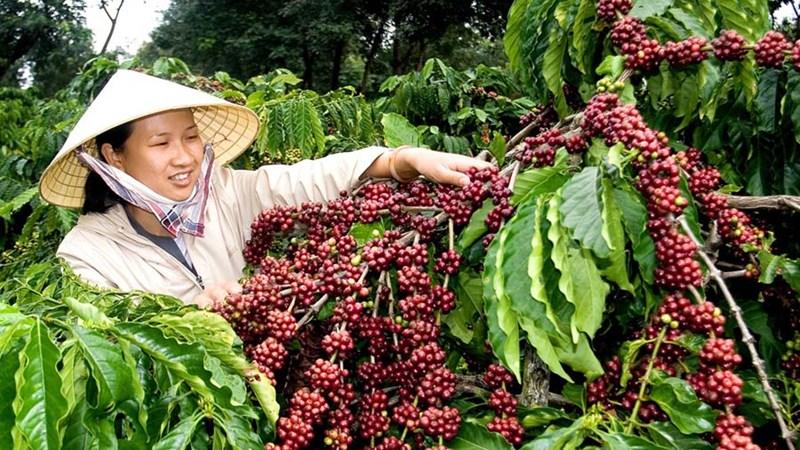 Gỡ khó cho nông sản xuất khẩu
