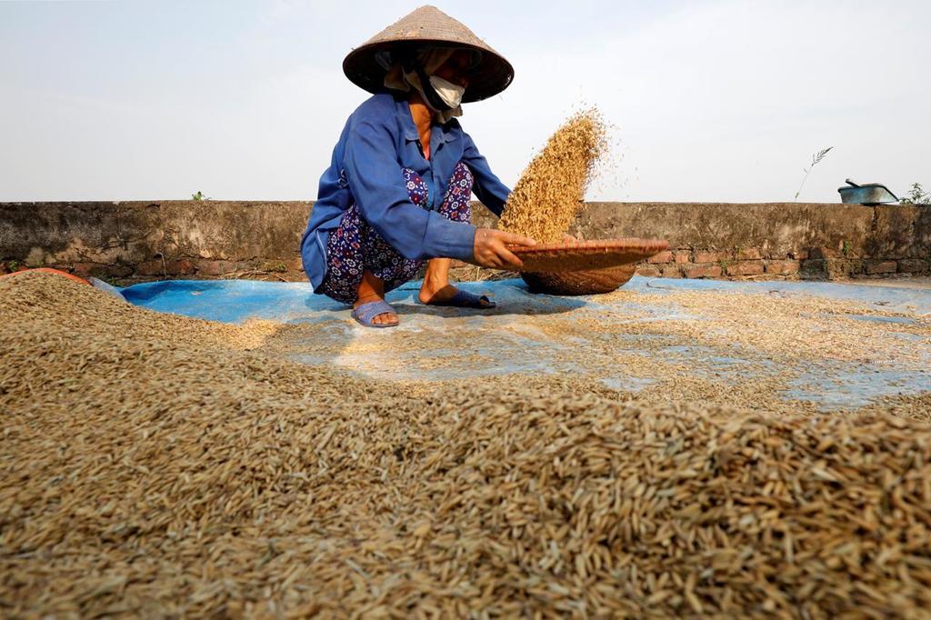 Xuất khẩu nông sản Việt - bán tấn thì nhiều mà két quá ít