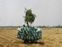 'Việt Nam gần như mất thị trường gạo Trung Quốc'