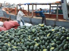 Trung Quốc ngừng thu mua, hoa quả Việt rớt giá thảm hại