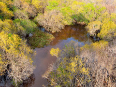 Chùm ảnh mùa thu đẹp ngỡ ngàng ở rừng ngập mặn Rú Chá