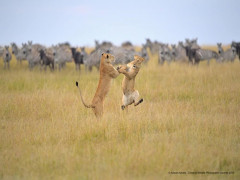 Chết cười với những khoảnh khắc vui nhộn trong thế giới động vật