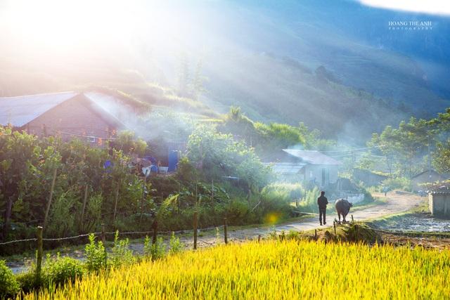 """3 thiên đường """"mùa vàng"""" ở Tây Bắc, đến khách Tây cũng """"mê như điếu đổ"""""""
