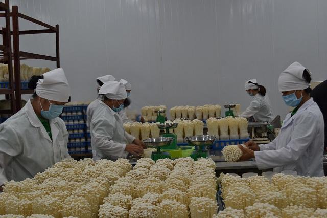 Ứng dụng công nghệ cao: Bước đột phá của nông nghiệp