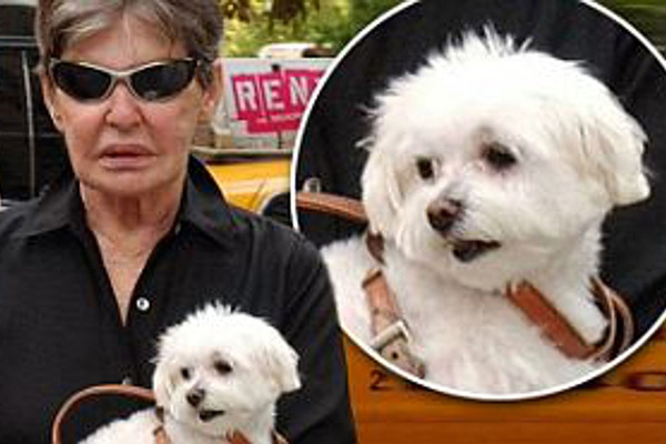 Nữ đại gia nổi tiếng keo kiệt, khi chết để lại 12 triệu USD cho chó cưng