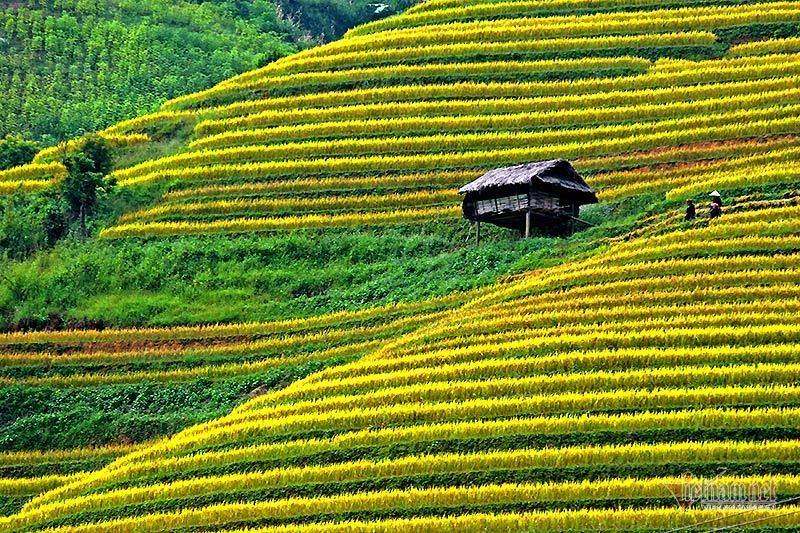 Cảnh sắc đẹp nhất thế giới mỗi năm chỉ có 1 lần ở Việt Nam
