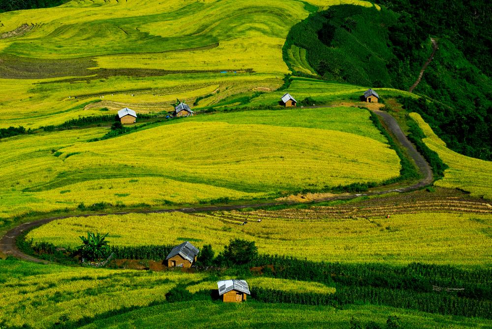 5 cung đường ngắm lúa chín ở Tây Bắc