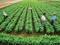 Kinh nghiệm phát triển nông nghiệp hữu cơ của các nước trên thế giới