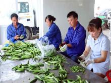 Hà Nội: Phát triển chuỗi cung ứng nông sản an toàn