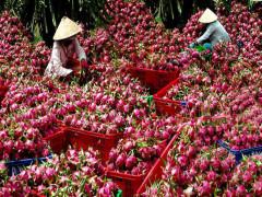 Việt Nam có thể trở thành Hà Lan thứ 2 chỉ sau 1 đêm