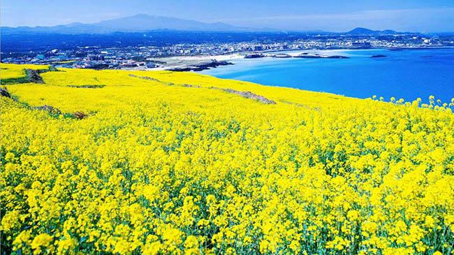 Những điểm đến đẹp lung linh tại Hàn Quốc