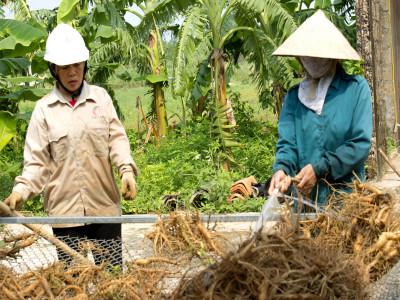 Công Ty TNHH Nông nghiệp công nghệ cao Tuệ Lâm khôi phục thành công nguồn gen loài sâm quý