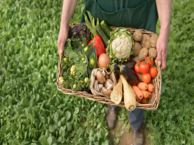 Còn lỗ hổng chính sách phát triển nông nghiệp hữu cơ