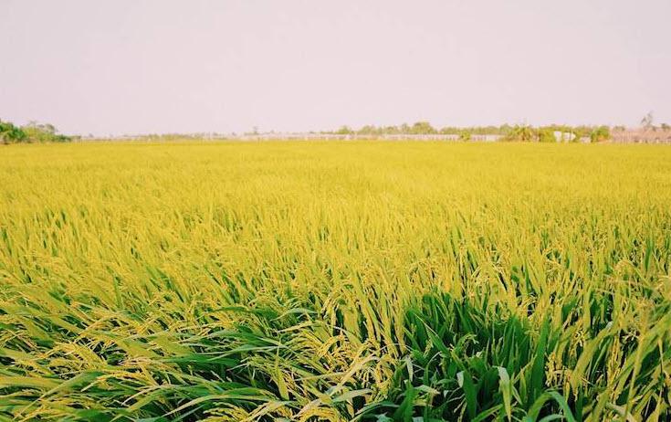 Chuyển mục đích sử dụng đất tại 2 tỉnh Anh Giang và Bình Thuận