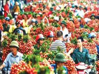 Giải pháp phát triển bền vững doanh nghiệp nông nghiệp