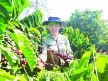 Mất giá nghiêm trọng, xuất khẩu nông sản tỷ USD giảm mạnh