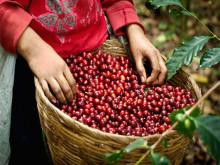 Cà phê Việt chờ tin tốt để hồi phục