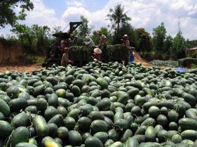 Chặn đường nhỏ tắc cửa lớn, hàng Việt sang Trung Quốc tụt mạnh