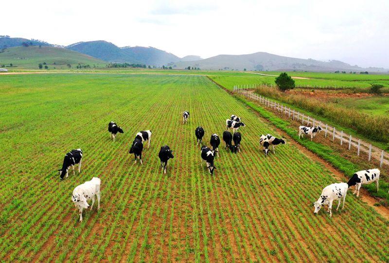 Tái cơ cấu ngành chăn nuôi: Thúc đẩy phát triển bền vững