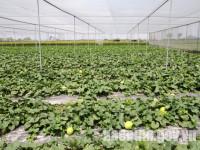 Bắc NInh phê duyệt chương trình khuyến nông giai đoạn 2020 - 2025