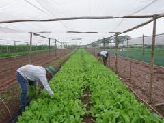 Sửa đổi các nghị định về quản lý đất đai: Tạo động lực phát triển nông nghiệp