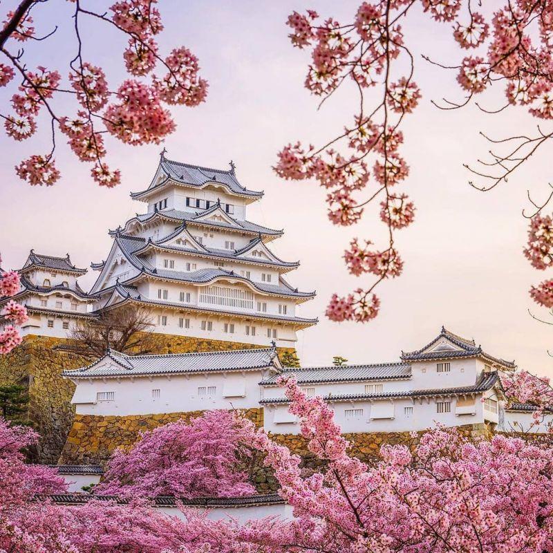 Lâu đài Hạc Trắng ở Nhật Bản