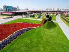 Bên trong vườn hoa lớn nhất thế giới nằm giữa sa mạc có gì đặc biệt?