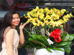 Hà Nội nhộn nhịp chợ hoa ngày Tết
