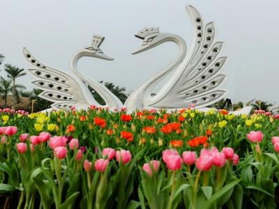Chiêm ngưỡng thung lũng hoa tại Hà Nội dịp đầu xuân Canh Tý