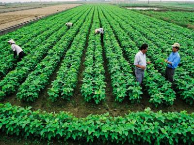 Nông nghiệp hữu cơ: Giải bài toán 'thiếu chuẩn'