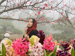 Xuân về, lên Fansipan thưởng hoa, lễ Phật