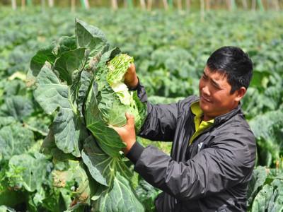 Nghịch lý giá rau xanh: Khan hiếm hàng hay tự đẩy giá lên cao?